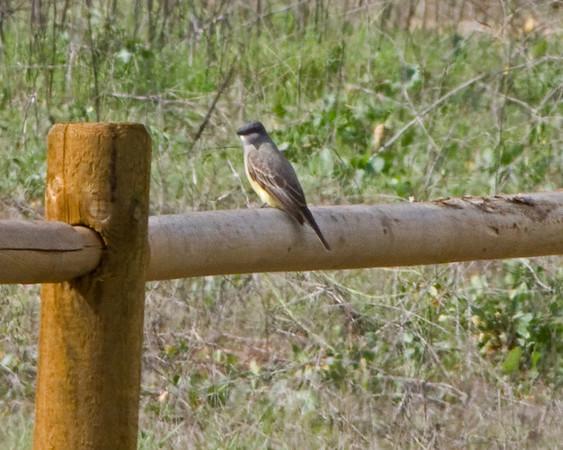 Bird identification hike - Lake Hodges